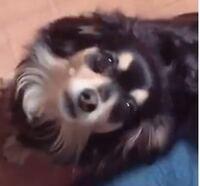 この犬種ってなんですか? 雑種かもしれませんが、、