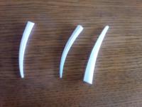 東京湾海岸で拾った牙のような尖った物が何なのか知りたいです。 中は空洞で縦に線が入っているのと入ってないもの2種ありました。長さは3~5cm 太さは太い方が3~5mmくらいです。