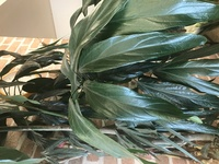 この植物の名を御存知の方教えて下さい。宜しくお願い致します。