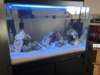 初めて、海水魚水槽立ち上げました!  60センチ水槽 カクレクマノミ2匹 ハタタテハゼ 3匹 デバスズメメ大 5.6匹 バランス的にどうでしょうか?  大丈夫そうなら、ハタタテハゼかれ導 入してこうかと思っ...