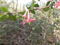 この花の名前を教えて下さい。 昨日、埼玉県寄居町の林の中で見つけました。 1cmほどの小さな花です。