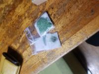 メルカリで水草を購入しました。今日は時間がなくて植える暇がないので、この水草はバケツに水を貼ってその中にうかべておけばいいですか?ラージパールグラスとヘアーグラスショートです。