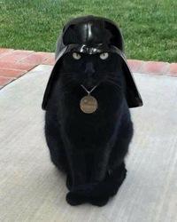 【自由帳】 これからは、私が帝国軍(ファーストオーダー)の指揮を執る!で。どうやったら指揮を執れるのですか?猫のダースベイダー卿を育成して下さる有志の方がいらっしゃいましたら名乗り出 て下さい❀.(*´◡`*...