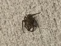 この蜘蛛の種類 分かります?