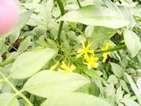 黄色い花 名前を教えてください