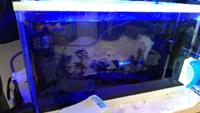 アクアリウム グッピー 照明のオンオフ・色に関して 最近アクアリウムを始めたばかりの初心者です。 現在、45cm水槽にグッピーオスメス2匹ずつ、テトラ4匹、ヤマトヌマエビ2匹、最近生まれたグッピーの稚魚4匹が...