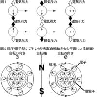 陽子はどんな形をしていますか。 丸?それとも三角?  以下は私見なのでお構いなく(詳しくはこちら https://okwave.jp/qa/q9626035.html の参考URL内参考URLの本文及び補足全10参照)。  図1 反対方向に自転しながら横並びで同方向に進むときと縦並びで同方向に自転するとき、同電荷間には電気斥力と磁気引力が働き、異電荷間には電気引力と磁気斥力が働く...