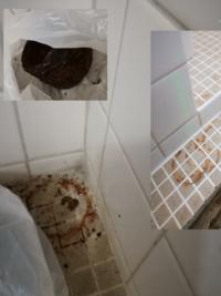 タイルの錆び汚れの落とし方  引っ越してきたボロマンションの風呂なのですが、 水が流れるところに中蓋のようなものがあり、完全に錆び腐っていました。 (画像左上) それを数日程度、タイルの上に置いてお...