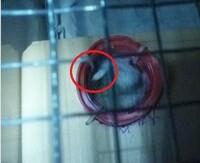ハムスターの巣箱として、木の箱に出入り口を付けてやったところ。  その出入り口の狭い穴によく出入りするようになったのです。ちなみに赤○はハムスターの尻尾です。 ハムスターはそのような狭い場所が好みで...