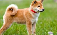 タイトルや歌詞に「犬dog」が入っている皆さんの好きな曲は何ですか? 私は「子犬のワルツ」 https://youtu.be/CNrl3Yiu7rQ