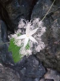帰り道に見つけて思わず写真を撮りました。 いくら考えてもなんでこんな形をしているのか分かりません。 何の花かも分からないので、何の花か分かる方、 もしくは何故こんな形をしているのか、知っている方がい...