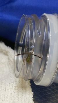 この虫何ですか? 体長5ミリ位です