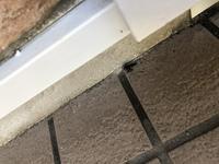 玄関先に蜂の巣が出来始めていて、ハチジェットで退治しました。 この蜂はスズメバチですか?