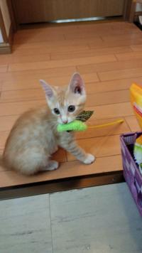 縄張り争いで負けて、泣きながら帰ってきました。 オス猫のくせに情、情けない、、。  私は幼稚園児の息子を持つ新米ママです。  私のセレブ猫ならボス猫にならないといけません。  それが猫愛好家と言うものです...