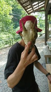 この頭蓋骨の形した動物わかりますか?