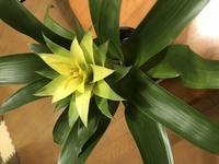 鉢植えの花をいただいたのですが、何と言う名前かわかりません。 室内、室外どちらが良いのでしょうか。