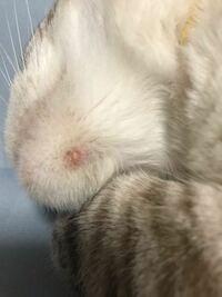 にきび 猫 あご 【獣医師監修】猫のニキビの症状、原因、治療法は?顎の黒いブツブツに要注意!