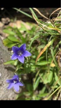 乗鞍岳に咲いていたと友人から送られて来た花です。 名前がわかりません。 どなたか教えて下さいませ。