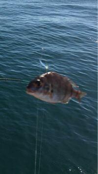 この魚なんですかね?教えてください!なんか赤っぽいです。ぼやけてますけど…