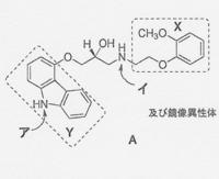 1.アドレナリン受容体に対する鏡像異性体間の作用は、同等である。  2.窒素原子、アは、イより塩基性が強い。  3.側鎖上のOH基は、β受容体結合部位において水素結合を形成する。 4.部分構造Xは、α1受容...