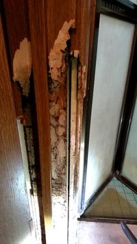 シロアリについて 教えてください。  築25年なのですが 最近お風呂のドアの閉まりが悪いので柱を見てみるとお風呂場の枠組の柱がシロアリに侵されていました。 まさかと思い お風呂場の入り 口の壁紙をめくっ...