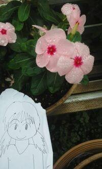 鉢植えでどんな花在りますか?