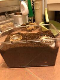 ニジイロクワガタの菌床産卵 サイトを見ていると、ニジイロクワガタは菌床産卵なら確実に産むと書いてあったのですが、産卵セットの組み方が分からずこのような適当な作りになってしまいました。正しい組み方を教えていただければ幸いです。加えて、菌糸ビンでも組むことが出来るかを教えていただきたいです。