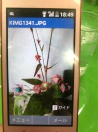 祖母がこの花の名前が知りたいと言っているのですが この花の名前が分かる方いませんか? 教えていただきたいです。