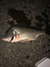 この魚の種類を教えてください! どんな食べ方がオススメかも知りたいです! よろしくお願いします!