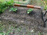 芽キャベツを育ててみようとおもって、野菜用の土・キャベツ用の肥料で苗を植えてみました。 色々検索してみてみたんですが、これで大丈夫でしょうか?  アドバイスもらえたら助かります。   これから寒くなるので時期的にも心配です。