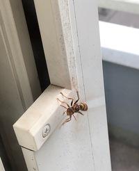 ベランダに蜂が飛び回っていました。  昨日まで雨で寒かったですが、今日は暖かいです。 そのせいか? 今日は二階のベランダとその周辺に蜂が飛び回っていました。  窓ガラスのこちらにいる私とか犬に、近寄...