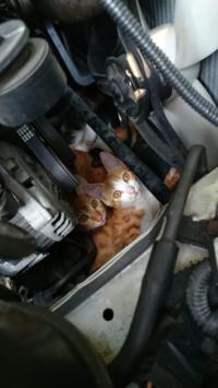 ボンネットの中に猫がいる写真なのですが… このまま車を走らせたらどうなってしまうのでしょうか…。想像しただけで怖いです。