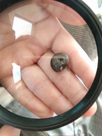 アンモナイトの化石についた歯型のような跡。これはなんだと思いますか? 子どもの本の付録についていたアンモナイトの化石です。1ミリ程度の穴が3,4個二列に並んで歯型のように見えるのですが 、これはなんだと思いますか?ちなみに裏には跡はありません。