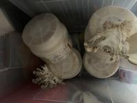 カブトムシの幼虫を育てるキットからキノコが生えました。  なんのきのこか教えてください