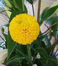 この花は何ですか? テニスボールくらいの大きさです。