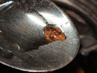 この生き物は何ですか? 海水水槽(ボトル)の掃除をしていましたら、写真のような軟体動物が出てきて、動いています。スプーンですくいました。何という種類ですか? 何を食べますか? 時々紐状になって動いてい...