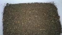 この腐葉土は使えますか? 針葉樹の腐葉土は油が根に悪影響を与えるらしいのですが、松林の下にほぼ土になっているこの写真の腐葉土が沢山埋まっています。 プランターの土に混ぜようかと思う のですがこの腐葉土は使えますか?