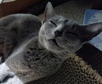 猫を飼っている方にお聞きします。 貴方は猫ちゃんに何を秘密にしていますか?    私は ・炬燵の存在 ・実は家に炬燵がある事 ・チュールの存在 ・検診やワクチン接種は私がスケジュー ルしている事 ・...