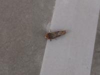 この虫はなんですか? 私的にはガかカメムシに見えるんですが。