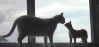 親猫を保健所で処分してもらおうか悩んでます。 子猫は可愛いのですが、大きいと可愛くなくて、、。  どう思いますか?