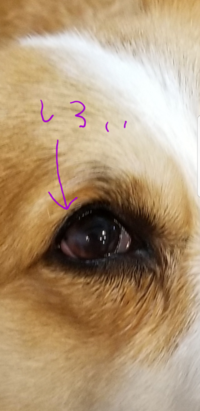 犬が目に傷をつけてしまい、ヒアルロン酸とベストロン目薬を処方されました。 ベストロンは三~四時間おきに点眼ですが夜中もでしょうか?  また一般的にどの位で治りますか? 散歩は行って 大丈夫ですか?  病院で聞きそびれたので詳しいかたよろしくお願いします。心配で犬の事ばかり考えています。