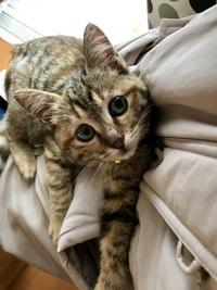この子猫は生後何ヶ月か分かりますか。