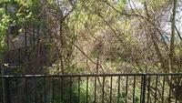 隣の空き地の枯れ葉の撤去について  我が家の隣にある空き地の茂った木で困っています。 空き地には細木や蔓が大量に繁り、家の庭まで蔓や枝が侵食しているほどなんですが、その空き地の所有 者は一切整備せず...