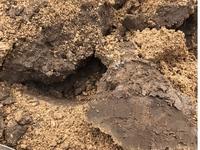 畑の土の作り方教えてください  2年ほど前には市場に出すような玉ねぎ、白菜、キャベツ、じゃがいもなど色々な野菜を植えていた畑だった土地に家を建てました。 畑がしたいと思い、堀ったと ころ5cmほど真砂土でその下が画像のような感じで握るとパラパラとなりますが粘土のように水分が多く固まったような土でした。 どのように土づくりをしたら良いでしょうか。  今後育てたいのはトマト、しそ、キ...