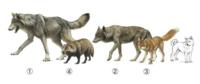 キツネと柴犬は殺し合ったらどちらが勝つでしょうか? 中身が詰まってるぶん、柴犬が勝つと個人的に思いますが、キツネは野生でさんざん小動物補食してますし・・・。