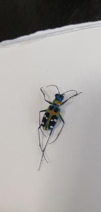 カミキリ虫の仲間かなと思うのですが。 この綺麗な虫の名前が分かる方がいらっしゃいましたら教えてください。
