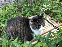 この猫ちゃんの模様の種類(サバ白とか、キジトラとか三毛とか)って何かわかりますか?