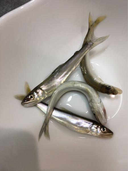 先程川で釣ってきた小魚なのですが、名前分かりますか?