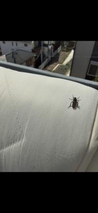 ベランダにこの虫が発生してます。名称と対処法を教えていただけますでしょうか。よろしくお願いいたします。