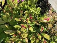 街路樹で見つけたこの植物が何なのか気になります。どなたか教えてください!!